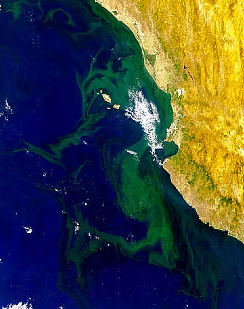 NASA_Puerto_Vallarta_algae_BloomLG